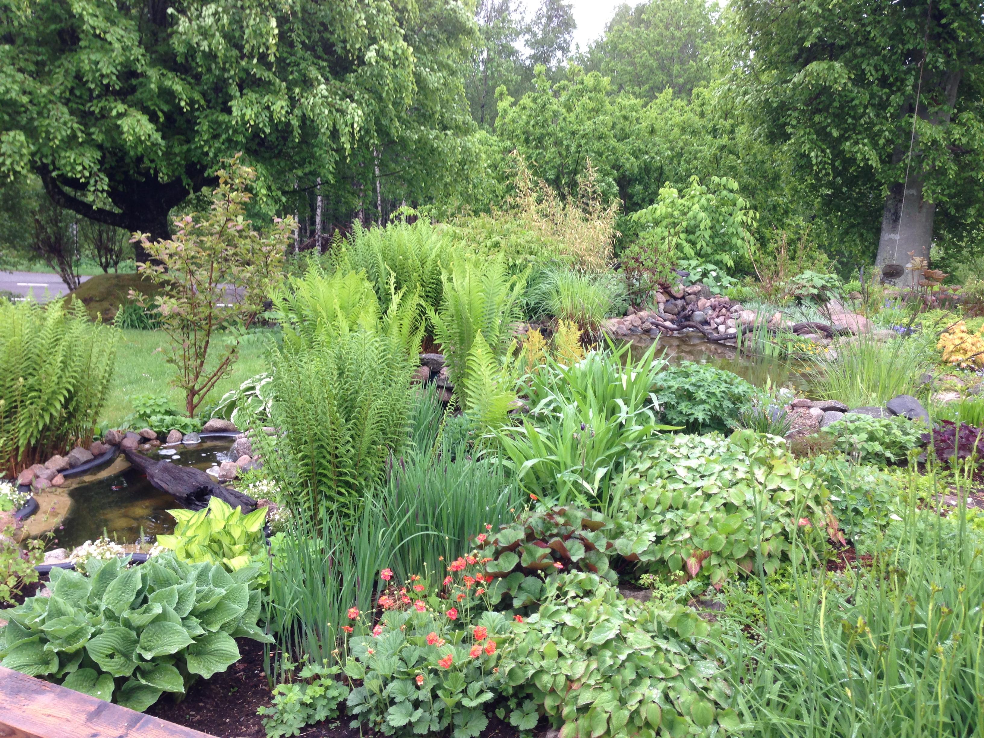 Plantor och växter